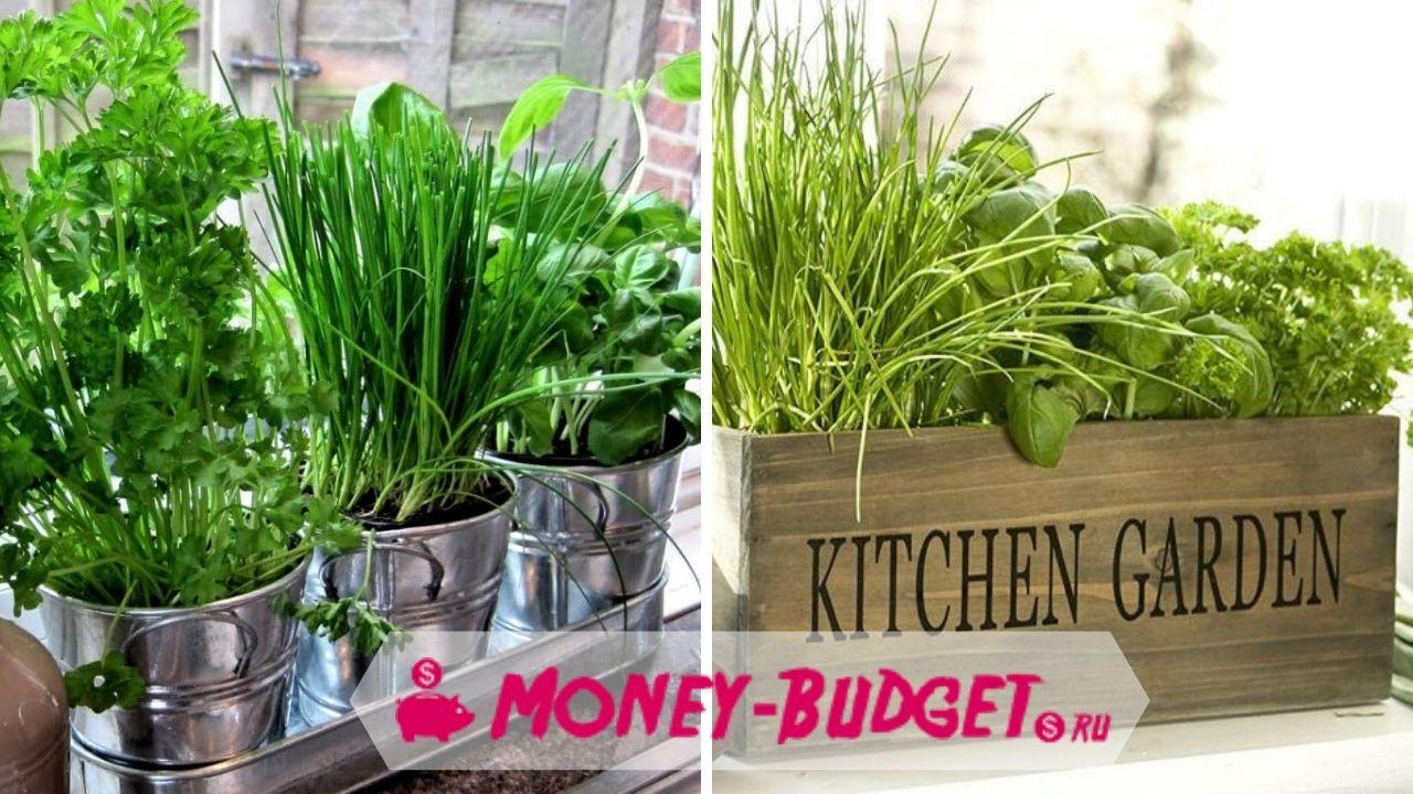 Выращивание зелени на подоконнике чтобы сэкономить деньги на продукты