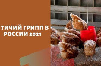 Птичий грипп в России 2021